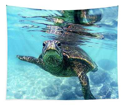 Turtle Photographs Wall Tapestries