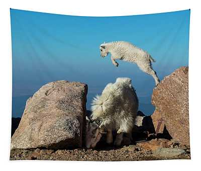 Leaping Baby Mountain Goat Tapestry