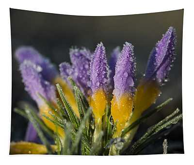 Frost And Dew On Crocuses Tapestry