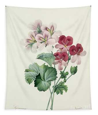 Geranium Variety Tapestry