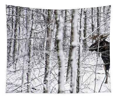 Glimpse Of Bull Moose Tapestry