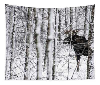 Glimpse Of Bull Moose Tapestry