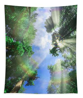 Glory Amongst Redwoods Tapestry