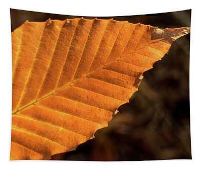 Glowing Beech Leaf In Evening Sun Tapestry
