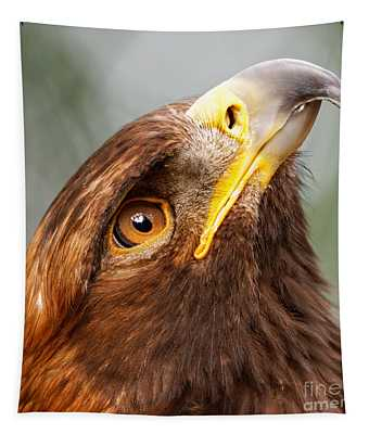 Golden Eagle - Sky Gazer Tapestry