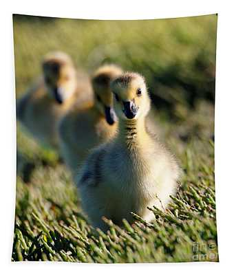 Gosling March Tapestry