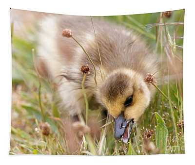 Gosling Nibble Tapestry