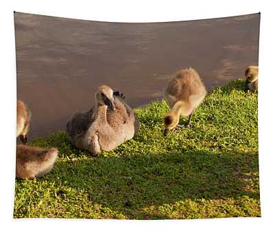 Goslings Basking In The Sunset Tapestry