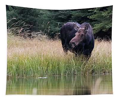 Grand Teton Moose Tapestry
