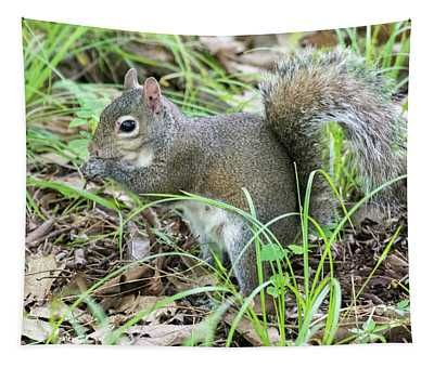 Gray Squirrel Eating Tapestry