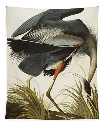Ornithological Drawings Wall Tapestries