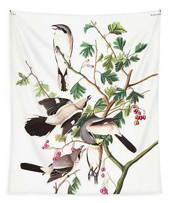 Great Cinereous Shrike Or Butcher Bird Tapestry