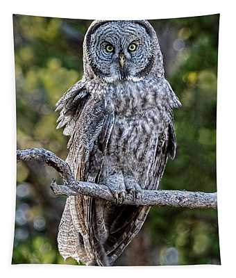 Great Grey Owl Yellowstone Tapestry