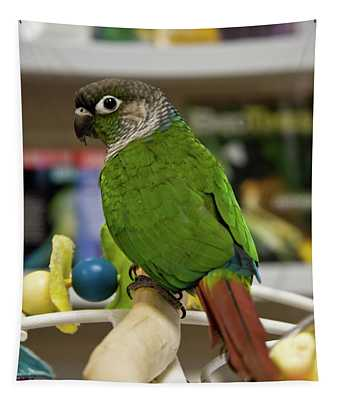Green Cheek Conure Tapestry