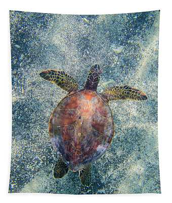 Green Sea Turtle From Above Tapestry