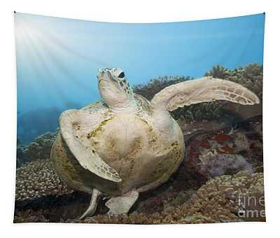 Green Turtle Underwater Tapestry