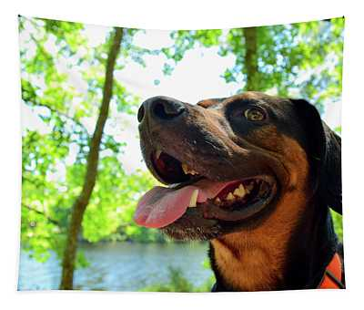 Gus On A Hike Tapestry