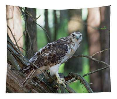 Hawk Portrait Tapestry