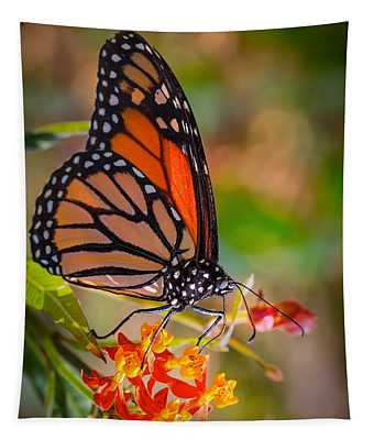 Hello Butterfly Tapestry
