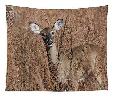 Hello Tapestry
