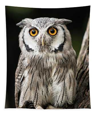 Scops Owl Tapestry