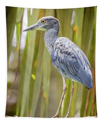 Yellow-crowned Night Heron Costa Rica Tapestry