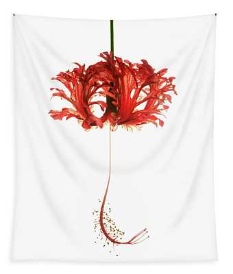 Hibiscus Schizopetalus On White Tapestry