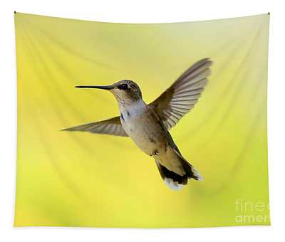 Hummingbird In Yellow Tapestry