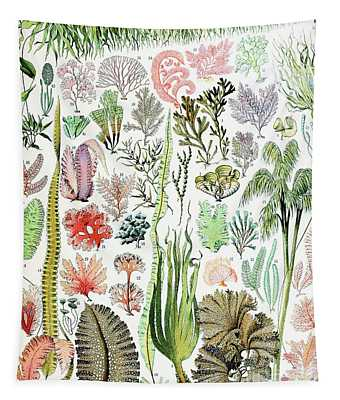 Illustration Of Algae And Seaweed  Tapestry