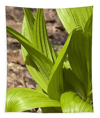 Indian Poke -veratrum Veride- Tapestry