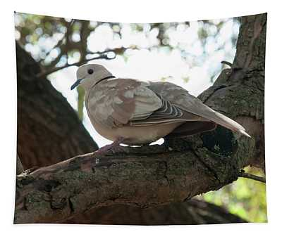 Indian Ringneck Dove Tapestry
