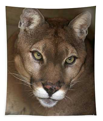 Intense Cougar Tapestry