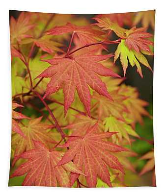 Japanese Maple Tapestry