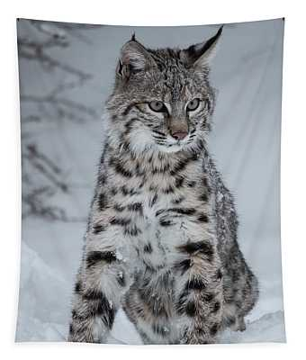 Juvenile Bobcat In The Snow Tapestry