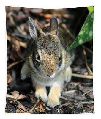 Juvenile Cotton-tail Rabbit Tapestry