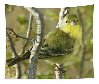 Lesser Goldfinch 1 Tapestry