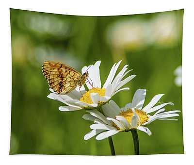 Lesser Marbled Fritillary On An Ox-eye Daisy Tapestry
