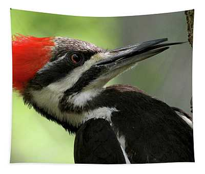 Lick It Up - Pileated Woodpecker Tapestry