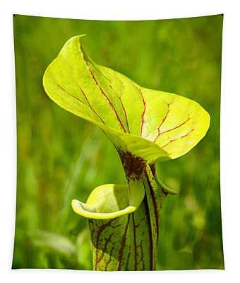 Light Green Pitcher  Tapestry