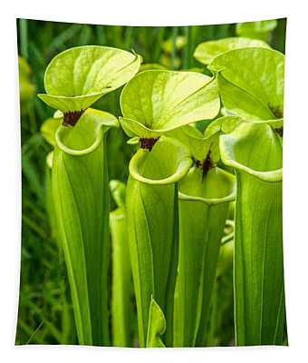 Light Green Pitcher Plant Tapestry