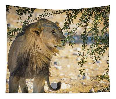 Lion Under Acacia Tree Tapestry