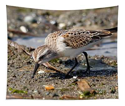 Little Western Sandpiper Tapestry
