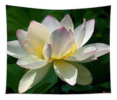 Lotus Beauty--disheveled Dl061 Tapestry