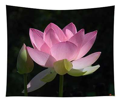 Lotus Bud--snuggle Bud Dl005 Tapestry