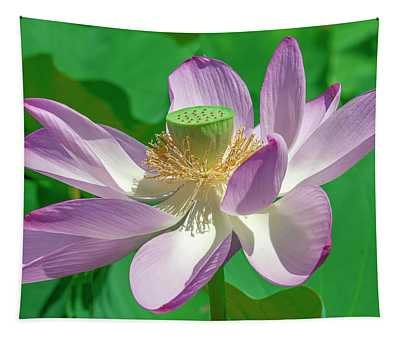 Lotus--fading II Dl0080 Tapestry
