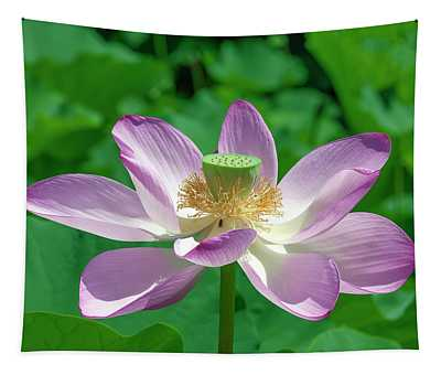Lotus--fading IIi Dl0081 Tapestry