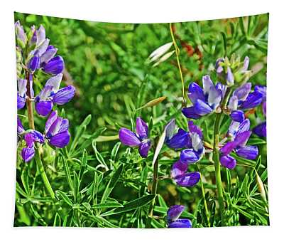 Lupine With Sea Oats At Muir Beach In Muir Woods National Monument Beach, California   Tapestry