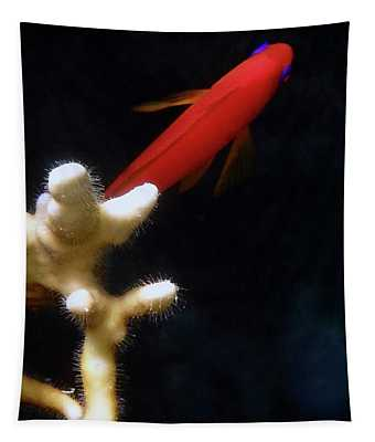 Macro Photo Underwater Of Anthias And Coral Tapestry