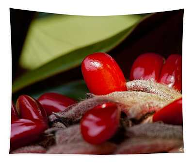 Magnolia Seeds Tapestry