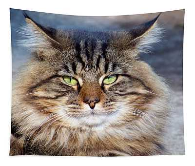 Maine Coon I Tapestry